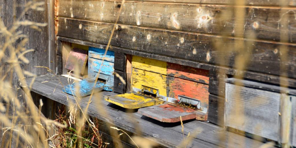 «Bei den Bienen muss ich mein Bestes geben, habe aber nicht die Kontrolle.»