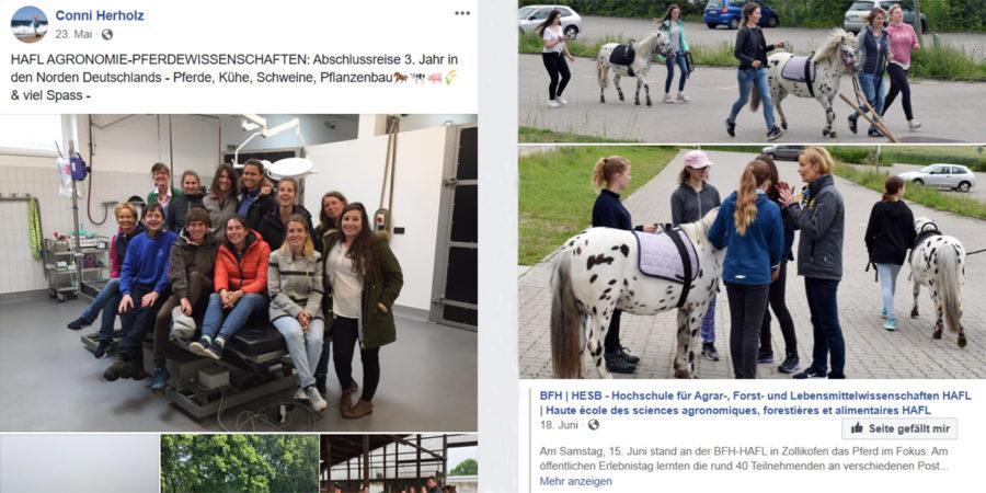 Der Post auf der rechten Seite beleuchtet auf eine schöne Art und Weise, wie Abschlussreisen des BSc Pferdewissenschaften an der HAFL ablaufen. So kann Wissen aus dem Arbeitsbereich mit der Community geteilt werden. Optimiert werden könnte hier die Verlinkung zum Facebook-Profil der HAFL. Dies wiederum ist beim geteilten Post vom 18. Juni gut umgesetzt.