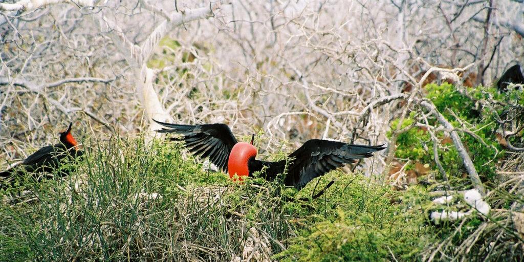 Die Tierwelt Ecuadors